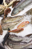Variety of fish and seafood on market ice display. Great variety of fish and seafood on fish market ice display royalty free stock photography