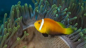 A variety of fish underwater in Maldives. Colorful and beautifull, this is a paradise for underwater life royalty free stock photo
