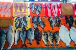 Variety of fish. On the beach fishermen in Chorrillos, Lima - Peru stock photography