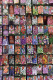 A Variety of Flower Seeds Royalty Free Stock Images