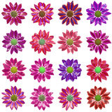 Variety of Flowers. Clip Art Set Collection Royalty Free Stock Images