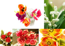 Variety of flowers. Roses, tulips, lilies, daisies, Collage of five photographs on a white background, a variety of colors, red, yellow, green, white, orange Royalty Free Stock Photos