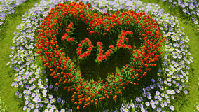 A variety of flowers in the shape of a heart on a green field, as a symbol of Valentine`s Day and love. A variety of tulips and daisies in the shape of a heart Stock Image
