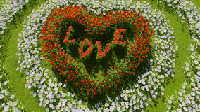 A variety of flowers in the shape of a heart on a green field, as a symbol of Valentine`s Day and love. A variety of tulips and daisies in the shape of a heart Royalty Free Stock Photo