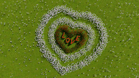 A variety of flowers in the shape of a heart on a green field, as a symbol of Valentine`s Day and love. A variety of tulips and daisies in the shape of a heart Stock Photography