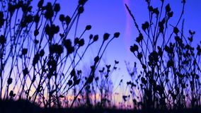 Variety of flowers swaying in the wind during sunset. A variety of flowers swaying in the wind during sunset stock video