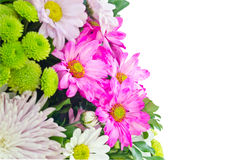 Variety flowers with white background Stock Image