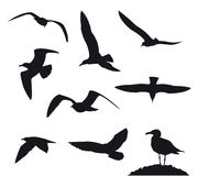 Variety flying sea-gulls vector illustration. Set Royalty Free Stock Photo