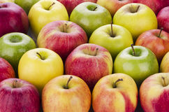 Variety of fresh apples. In rows Royalty Free Stock Photos