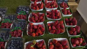Variety of fresh blackberries and strawberries sold on local fruit market, trade. Stock footage stock video