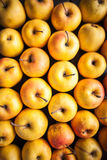 Variety of fresh colorful apples Royalty Free Stock Photos