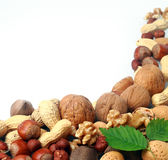 Variety of fresh culinary nuts as a border Stock Images
