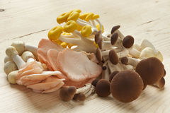 Variety of fresh edible mushrooms Royalty Free Stock Image