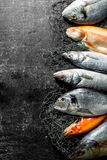 Variety of fresh fish. On dark rustic background royalty free stock images
