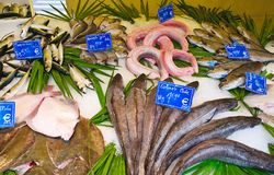 Variety of fresh fish on ice Royalty Free Stock Images