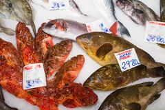 Fresh fish variety for sale at seafood market, Palma, Mallorca Royalty Free Stock Photography