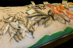 Variety of fresh fish in the market Royalty Free Stock Image