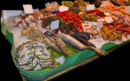 Variety of fresh fish in the market Stock Photos