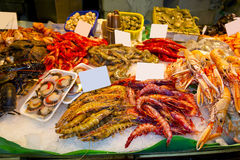 Variety of fresh fish in the market Royalty Free Stock Photo