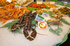 Variety of fresh fish in the market Stock Images