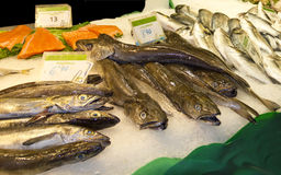 Variety of fresh fish in the market Royalty Free Stock Photos