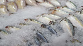 Variety Fresh Fish at the market on ice stock video footage