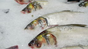 Variety Fresh Fish at the market on ice stock footage