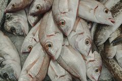 Fresh raw fishes on ice. Variety of fresh fish at the fish market Stock Photography