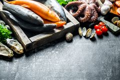 A variety of fresh fish, octopus and oysters. On dark rustic background stock image