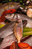 Variety of fresh fish seafood Stock Photography