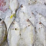 Variety of fresh fish seafood in market closeup background Royalty Free Stock Images
