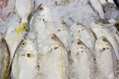 Variety of fresh fish seafood in market closeup background Stock Photo