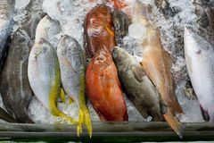 Variety of fresh fish seafood in market closeup background Stock Photos