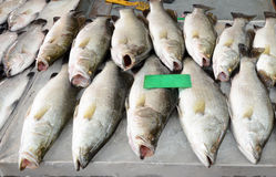 Variety of fresh fish seafood in market Stock Photos