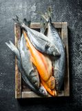 A variety of fresh fish on a tray. On dark rustic background stock photos