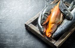 A variety of fresh fish on a tray. On dark rustic background royalty free stock photography