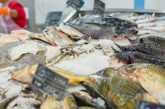 Variety of fresh fishes on ice table in shop Stock Images