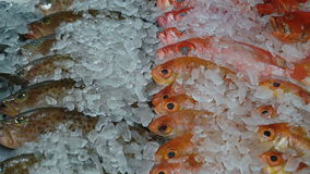 Variety of fresh frozen fish stock video