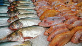 Variety of fresh frozen fish stock video footage