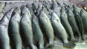 Variety of fresh frozen fish stock footage