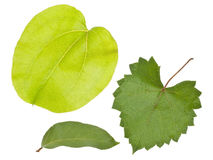 Variety of Fresh Green Leaves Stock Photo