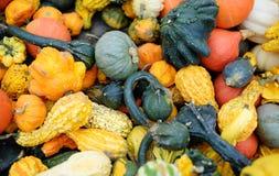 Variety of fresh healthy bio pumpkins on farmer agricultural market at autumn