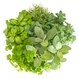 Variety fresh herbs isolated on white. Background. marjoram, parsley, basil, rosemary, thyme, sage Royalty Free Stock Photos