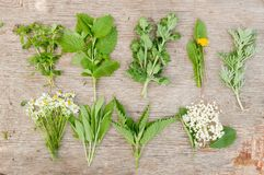 Variety of fresh herbs Royalty Free Stock Image