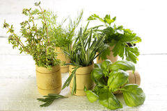 Variety of fresh herbs on white boards Stock Image