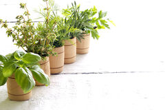 Variety of fresh herbs on white boards Stock Images