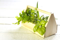 Variety of fresh herbs on white boards Stock Photos