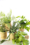 Variety of fresh herbs on white boards Royalty Free Stock Images