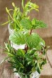Variety fresh herbs Royalty Free Stock Photos