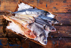 Variety of fresh marine fish on ice in a crate. Variety of fresh marine fish on ice in a small wooden crate at a restaurant or fishmonger to preserve their royalty free stock images
